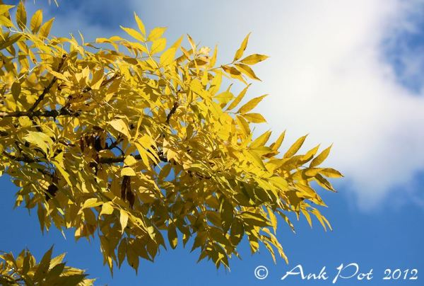 Yellow leafs
