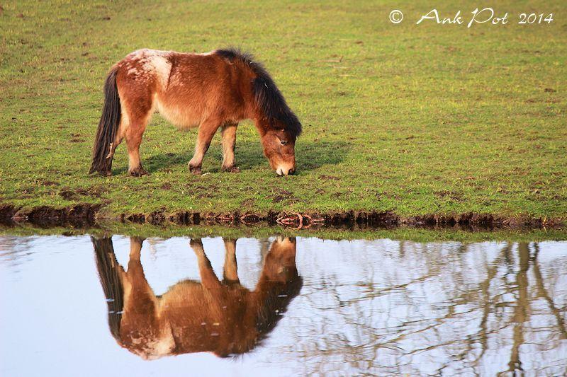 mirrored horse