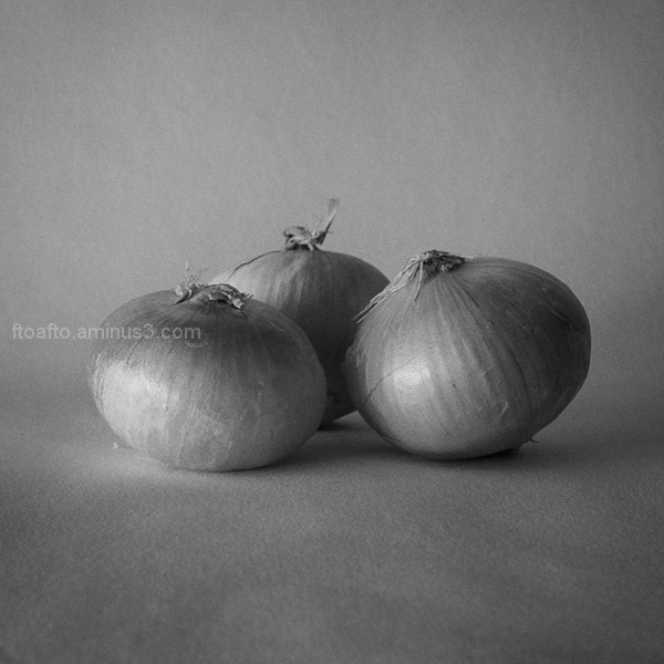 Cebollas / Onions