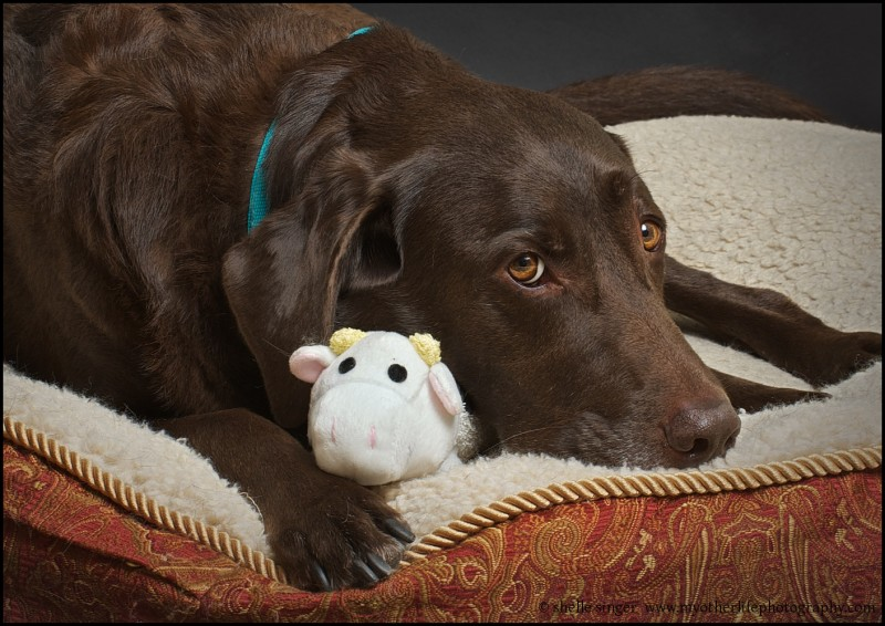 Buddy with Cow Toy
