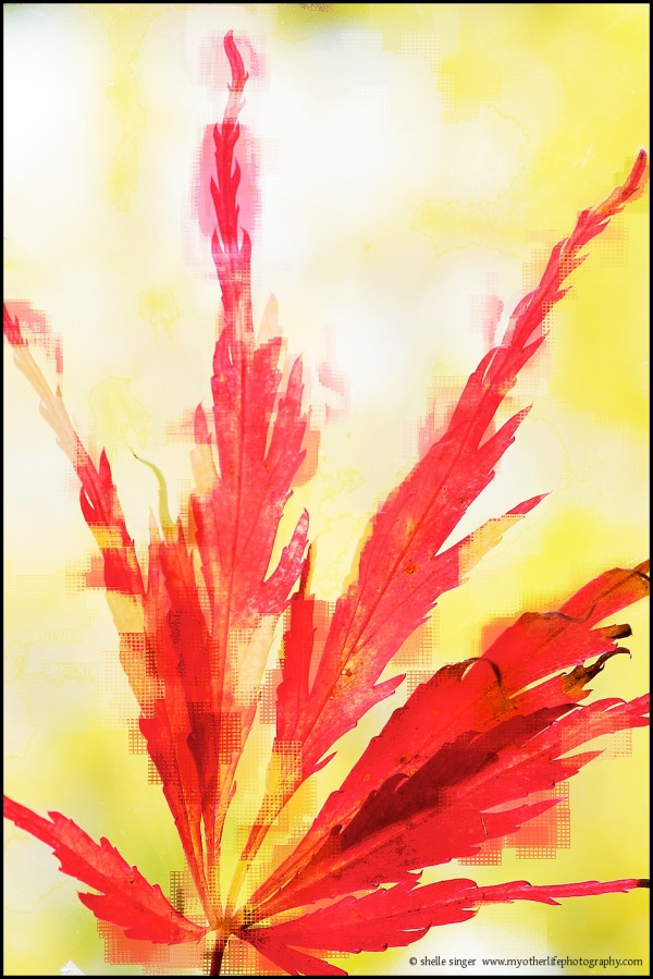 Red Leaf with Mesh
