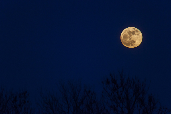 Mikro kuu
