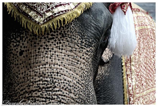 Elephant Memories