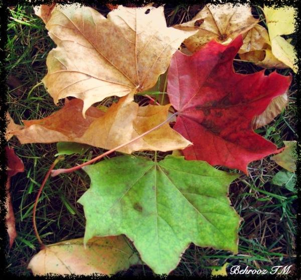 Autumn vitrine