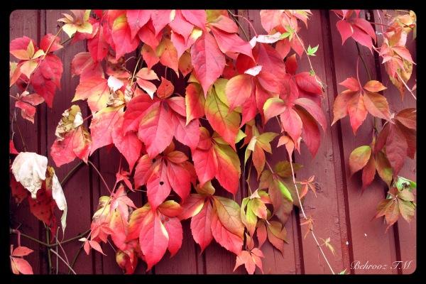 Autumn vitrine 2