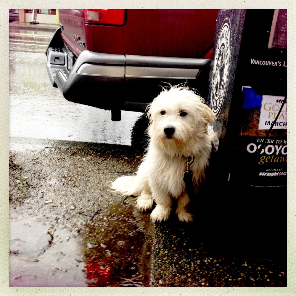 Dog in the Rain