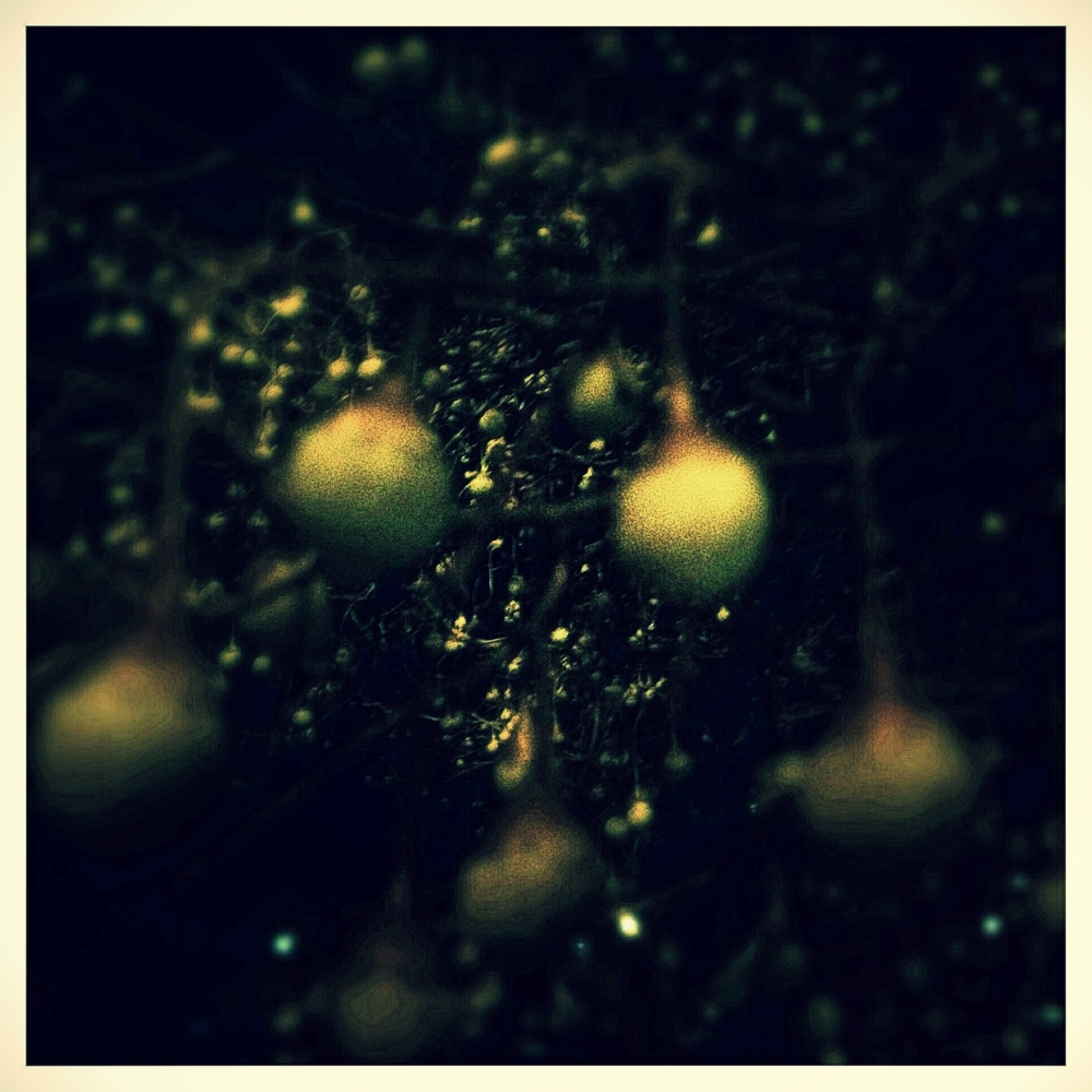 Abstract of styrax at night