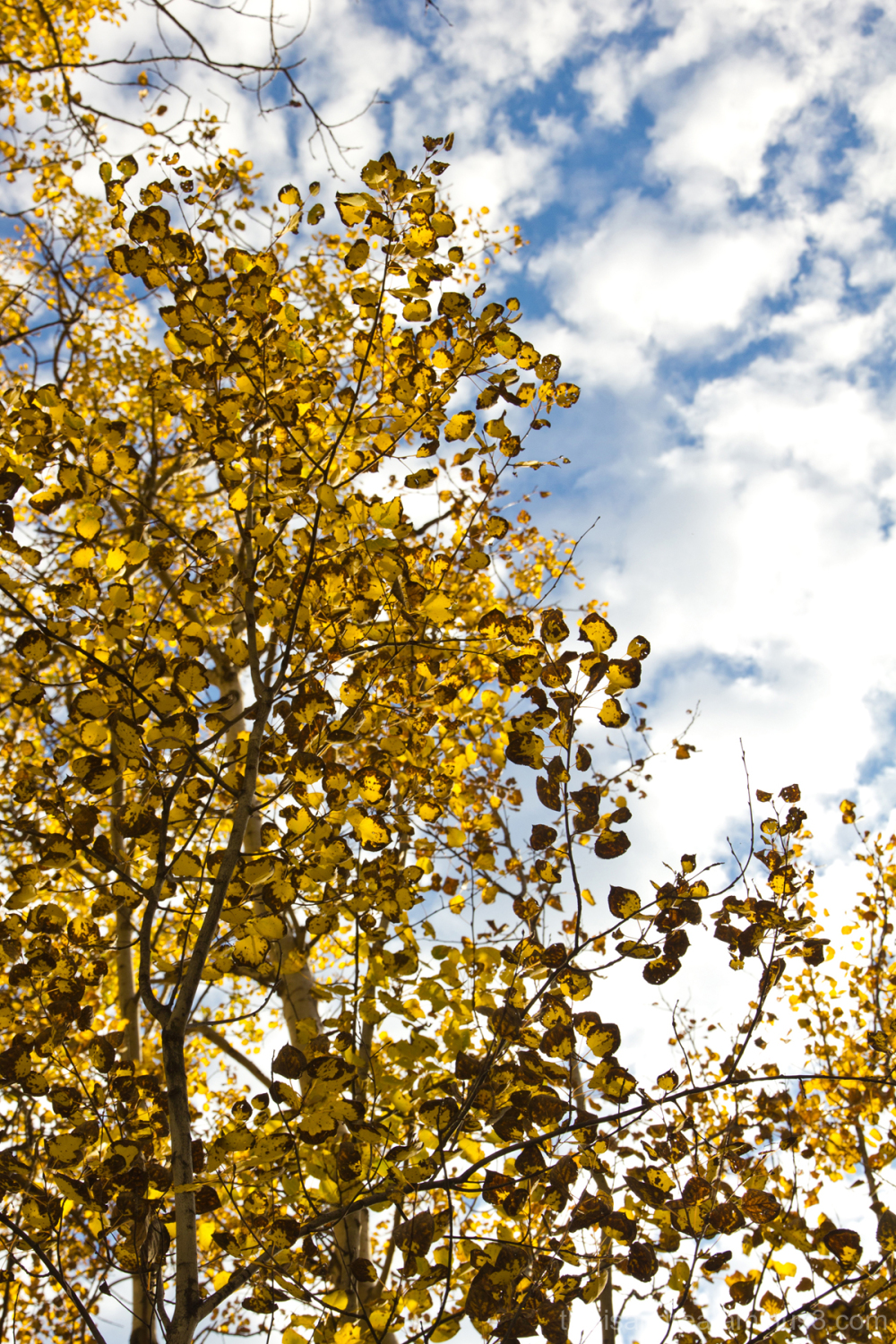 close-up of autumn leaves against blue sky