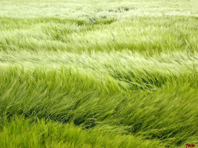Le vent et les herbes