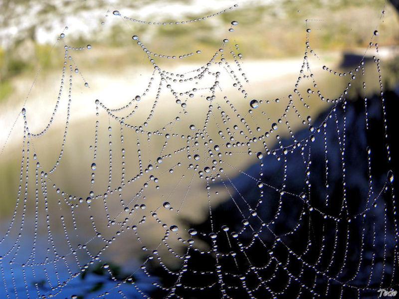 La toile d'araignée