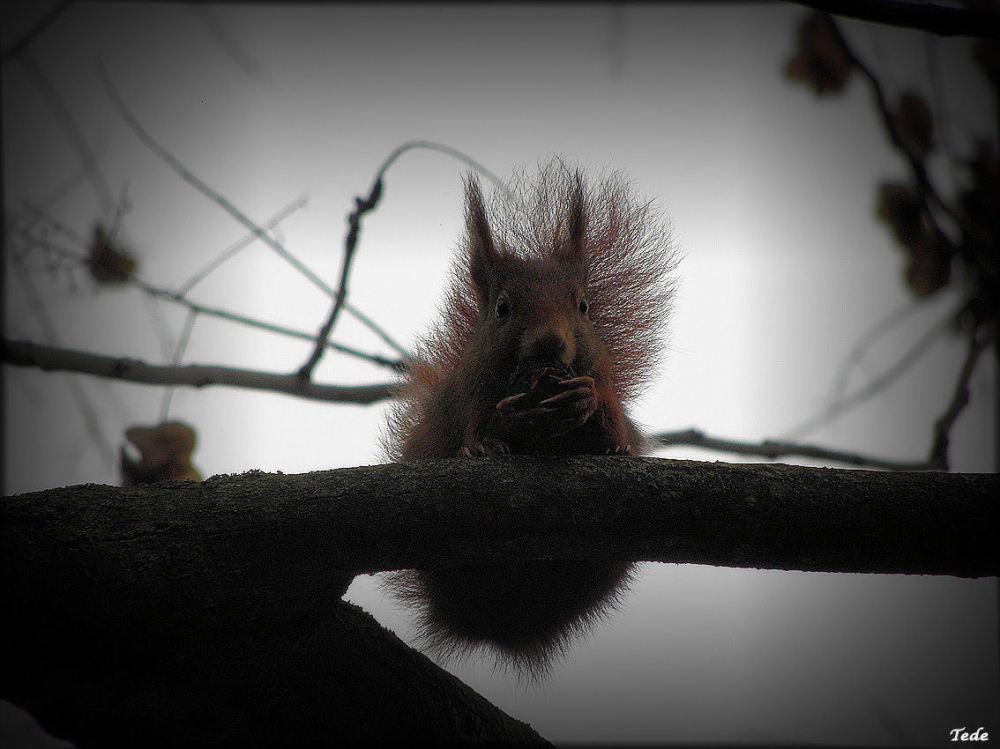 L'écureuil et sa noisette