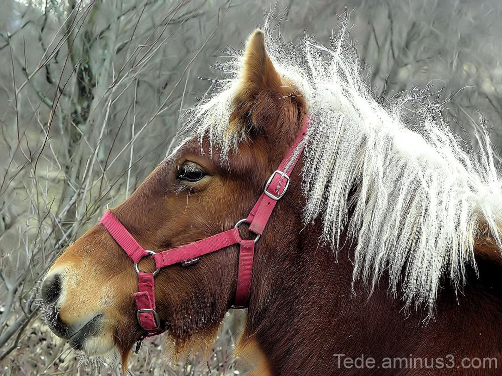 Profil de cheval