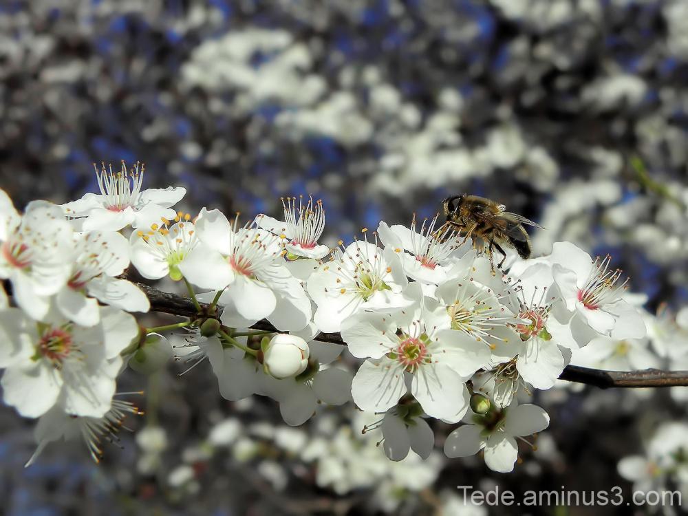 Les fleurs et l'abeille