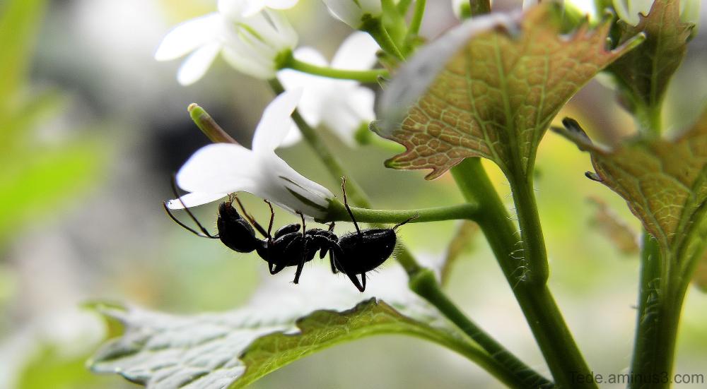 La fourmi et la fleur
