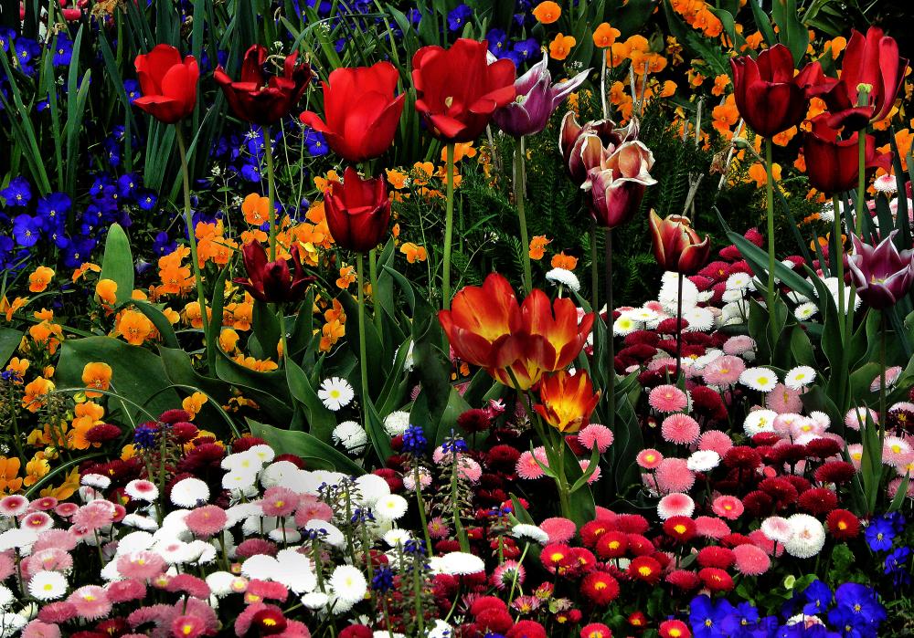 Fleurs à Versailles
