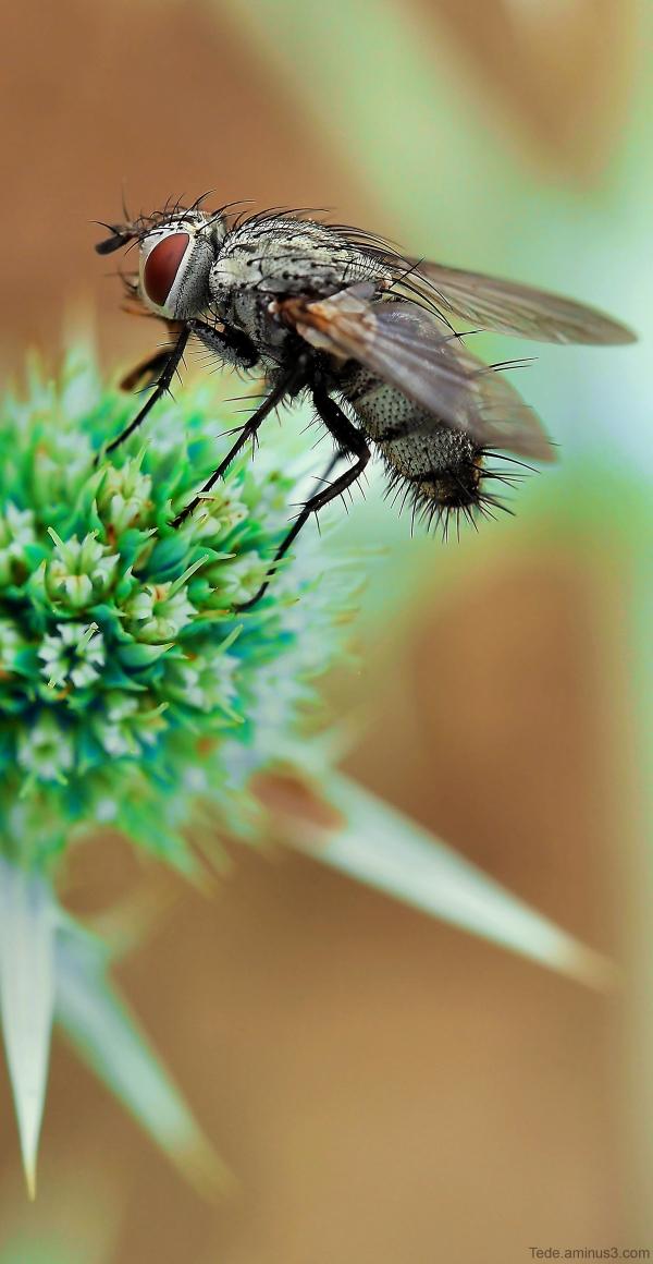 Mouche sur une fleur