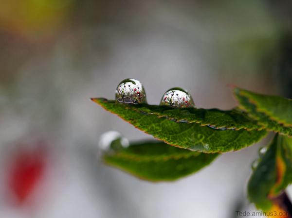 Reflets dans deux gouttes de pluie