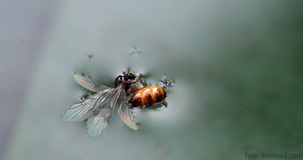 Insecte dans l'eau