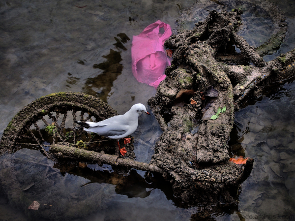 Nettoyage du Canal St-Martin Paris