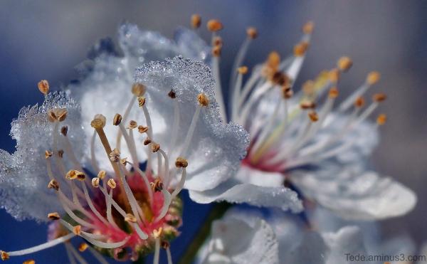 Fleur et glace