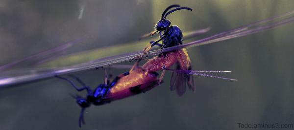 Insecte au coucher du soleil