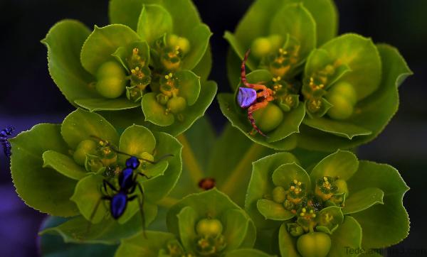 Fourmi et araignée