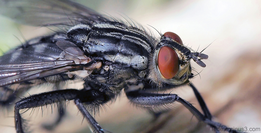 Gros plan sur une mouche