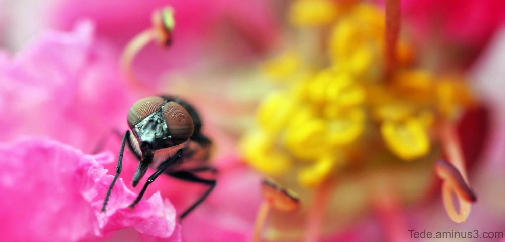Mouche dans une fleur