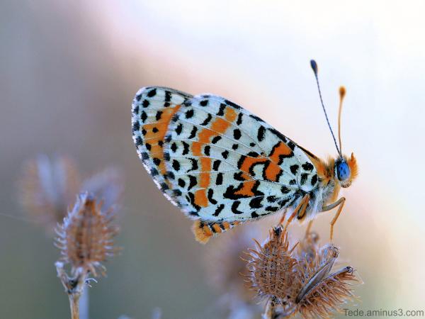 Papillon au soleil