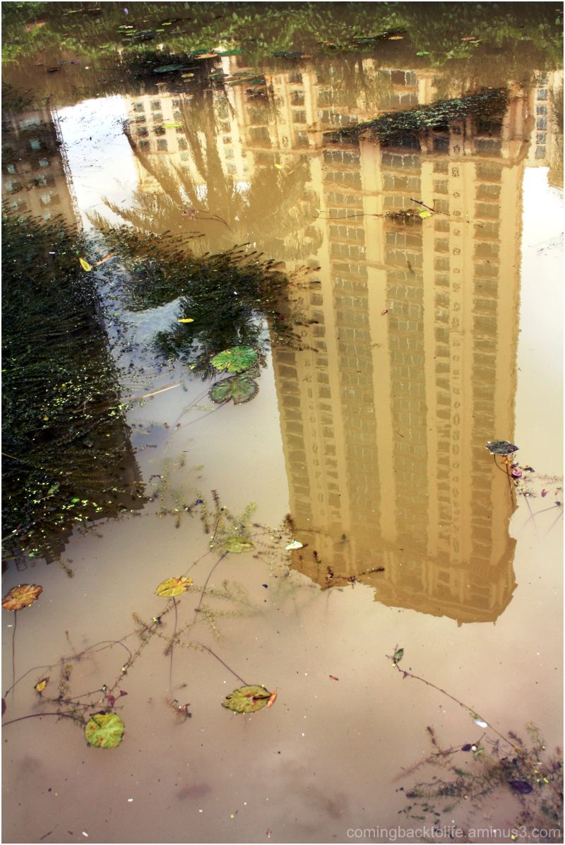 skyscraper in a puddle