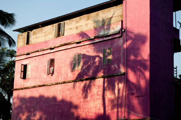 Rose indien  /  Indian flashy pink