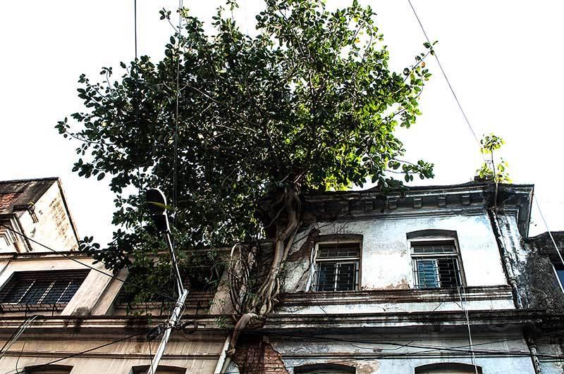 Un arbre dans la ville / A tree in the city