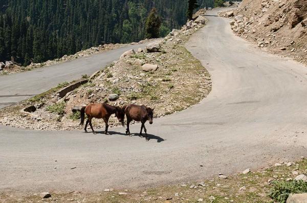 La route / The road 2