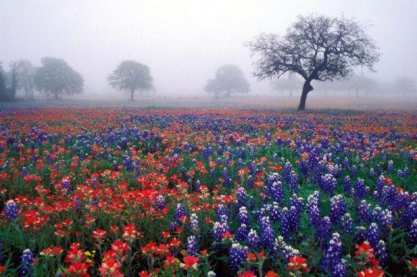 Texas is blooming