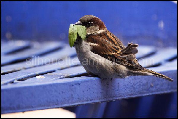 Green Life_ photo by Mehrsan  Javan