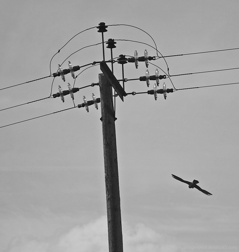 Was that a Bird on a Wire?