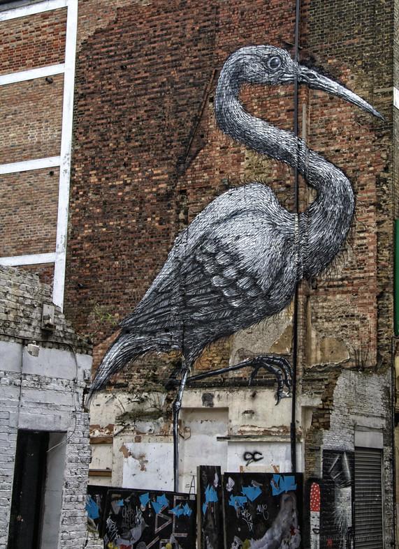 Roa's heron