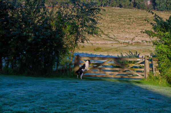 Scenes from an early autumn dog walk #1