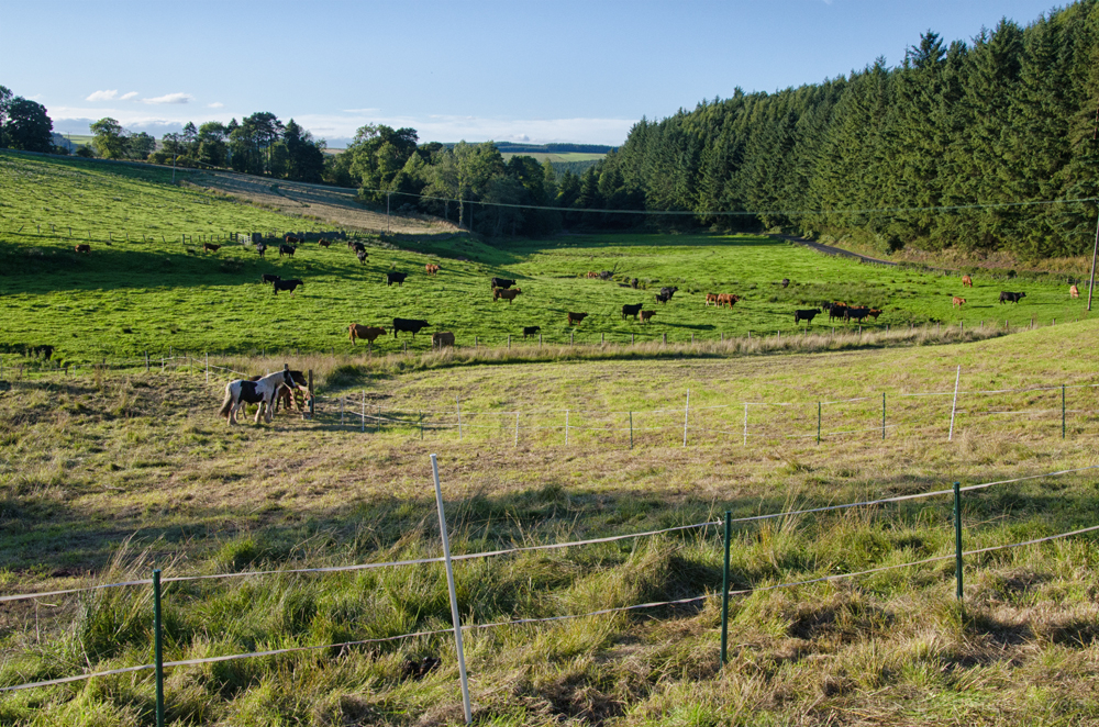 Rural idyll!