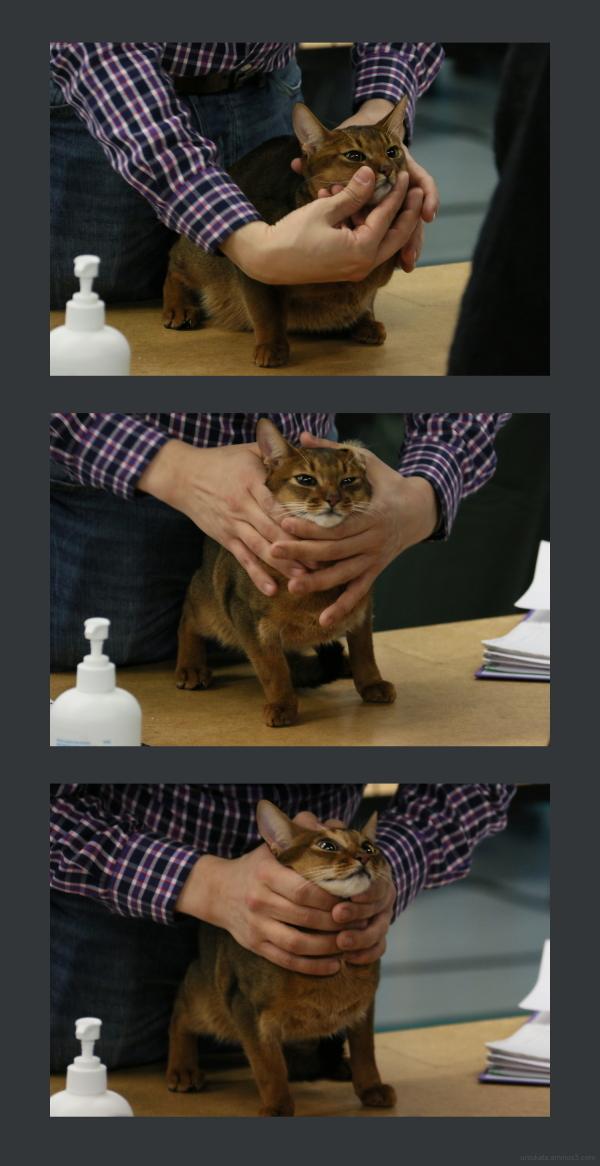 Cat show
