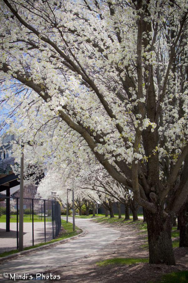 A walk around campus
