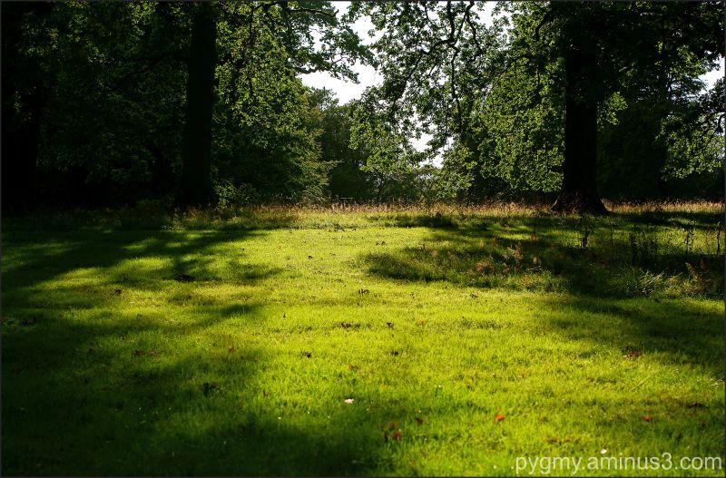 sunlight on grass