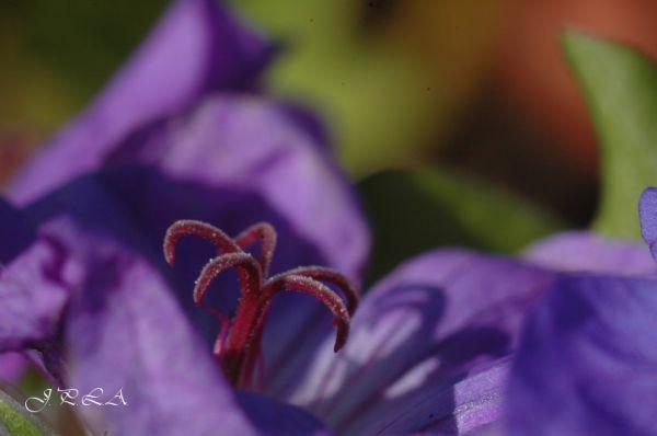 Ancre de fleur ..