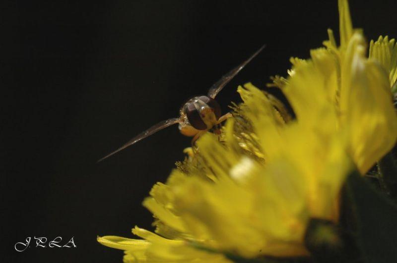 Sur une fleur jaune