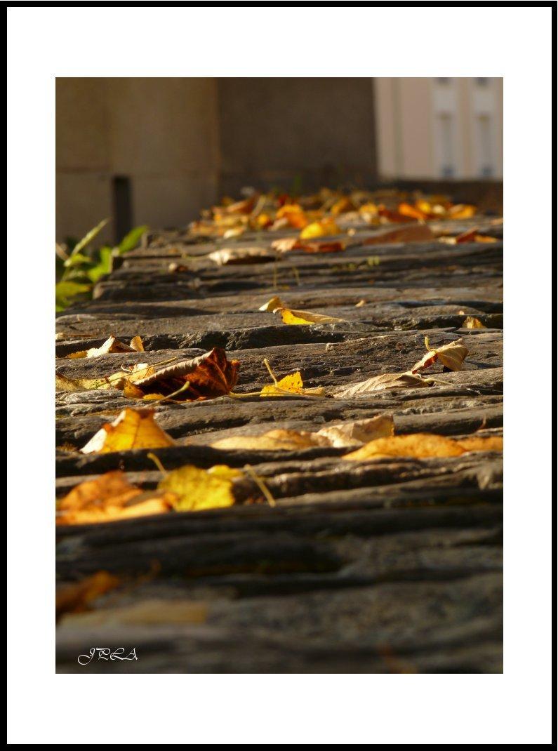 Lumière d'automne #9