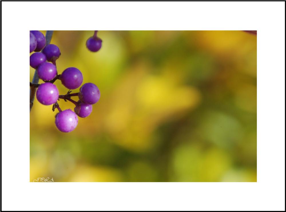 Délice d'automne #2