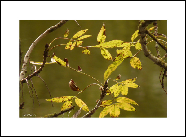 Teintes d'automne #5