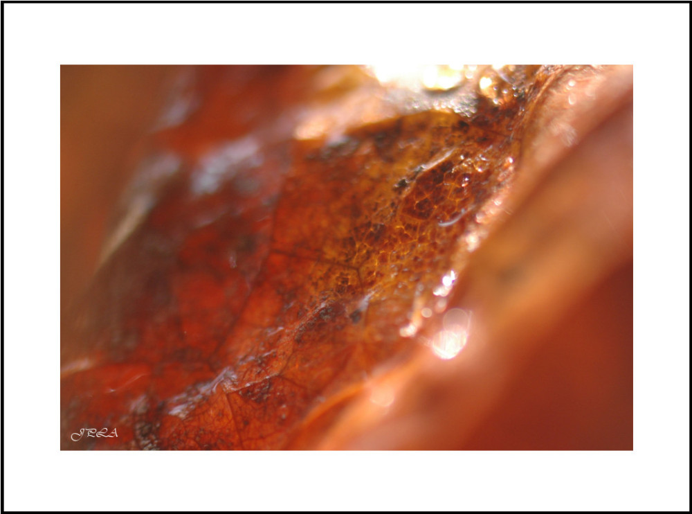 Teintes d'automne #8