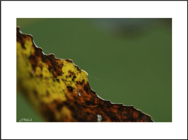 Teintes d'automne #10