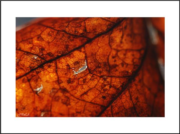 Teintes d'automne #11